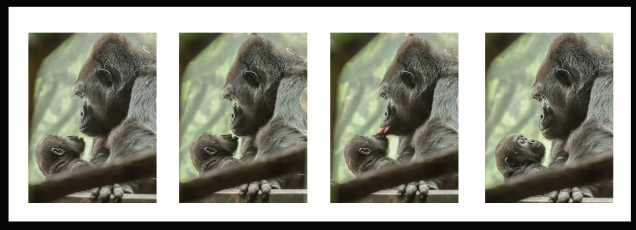 GorillaBlog2