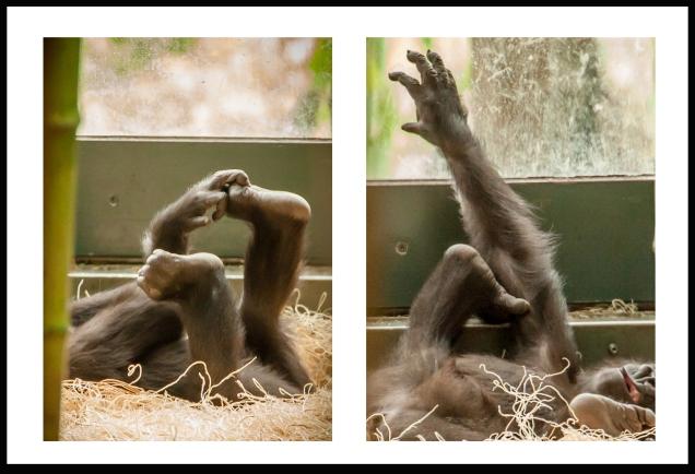 GorillaBlog3