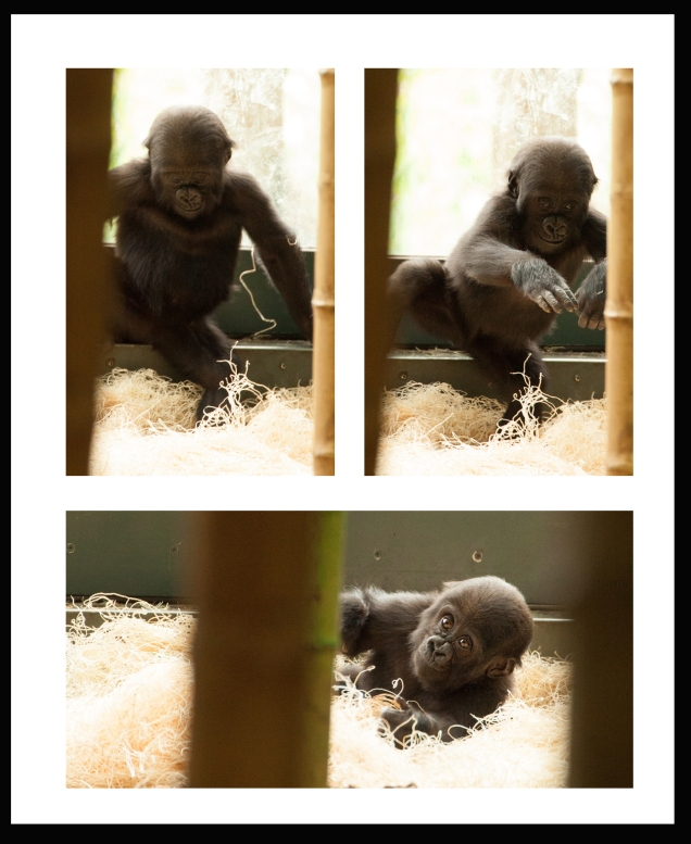 GorillaBlog4