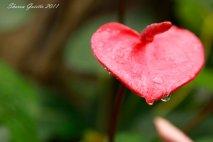 love26